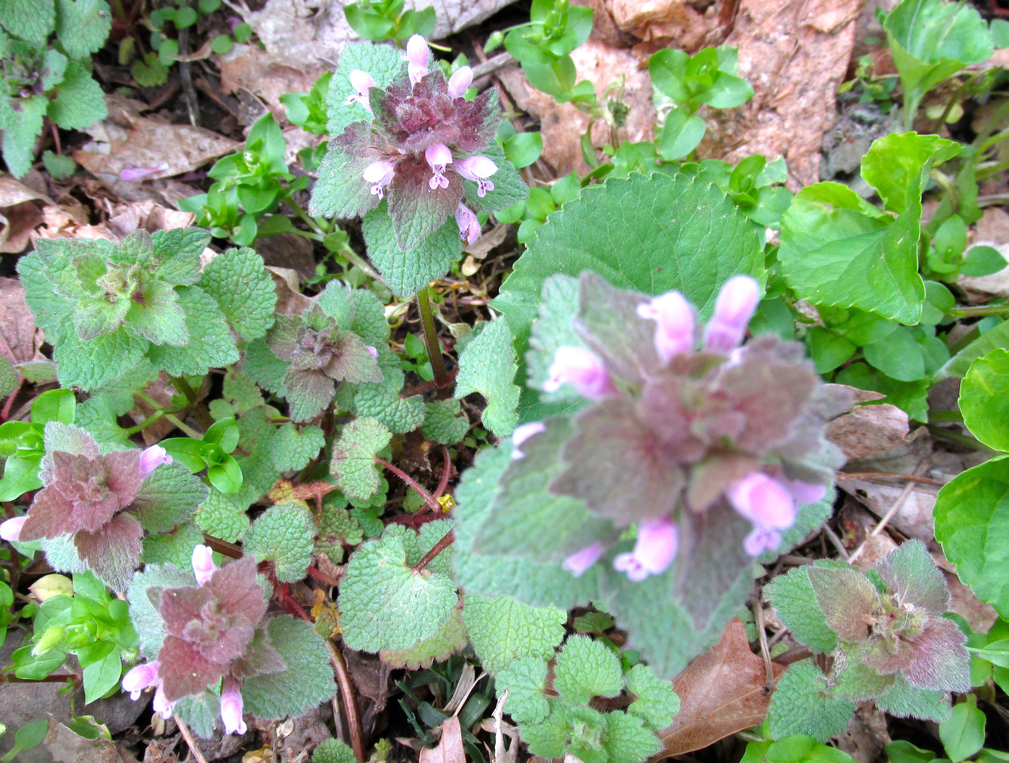 Weeds of April – daysingarden