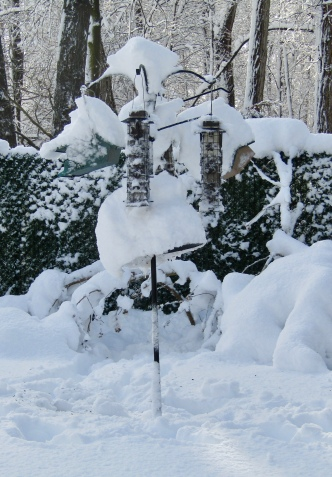 Bird feeders after nor'easter March 7, 2018