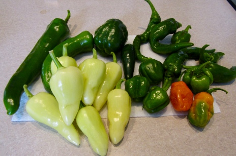 Pepper harvest October 12, 2017